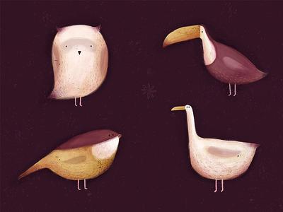 Birds bird seagull owl