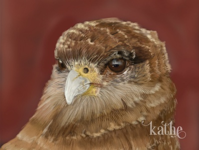 Bird character characters digitalart digital painting bird icon bird illustration bird digital illustration art artwork illustration