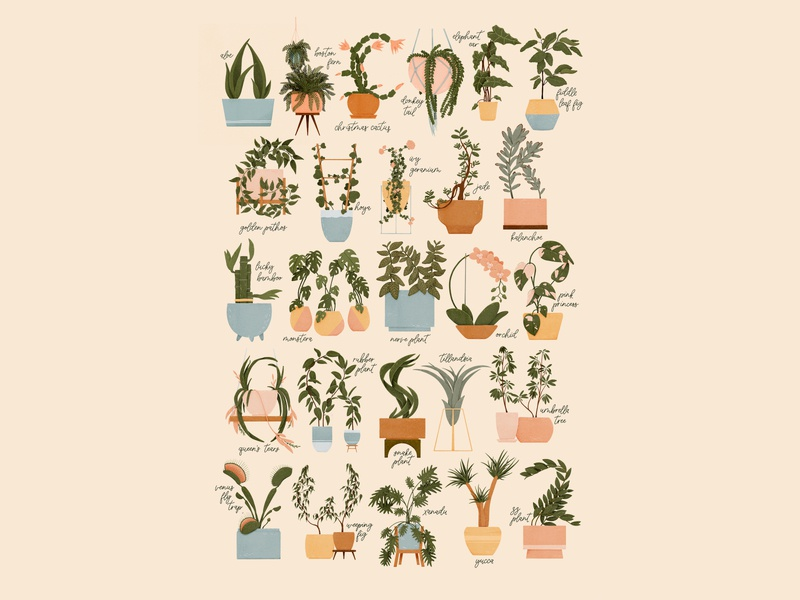Houseplant Alphabet