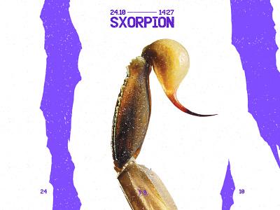 SXORPION - 24.10 sharpen sharp photoshop graphic design purple scorpio scorpion vector typography poster branding minimal design