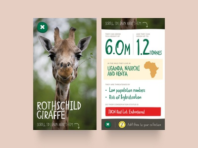 Chester Zoo App – Animals chester zoo collect figures data facts giraffe animal zoo iphone illustration app