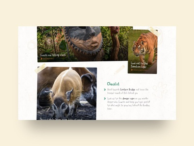 Islands at Chester Zoo – Logbook tiger animal logbook chester zoo islands jungle microsite