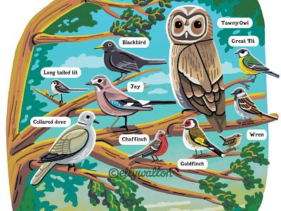 Bird Spotting editorial illustration illustrations magazine editorial nature garden wildlife illustration birds