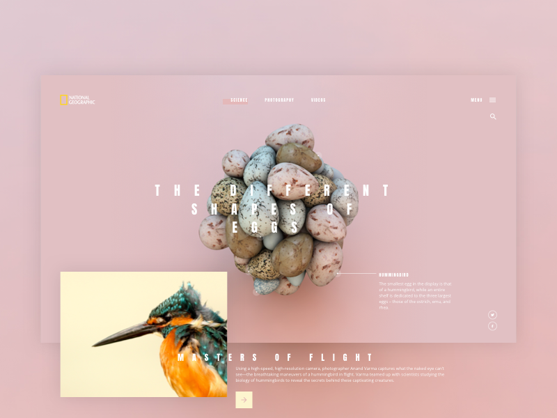 EGG sketchapp experience everyday interface web ui minimal flat digital clean app bird