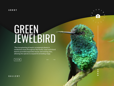 BIRD sketchapp everyday experience interface web ui minimal color bird clean app landing