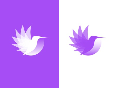 Colabri Logo versions illustration graphic purple wings colibri bird transitions icons branding logodesign logo