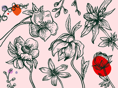 Botanical Pattern twitch etching adobe draw pattern botanical flowers vector drawing illustration