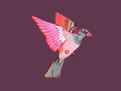 Sparrow Illustration yellow purple red orange grey pink flight bird colorful drawing sparrow illustration