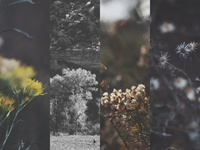 iPhone5 Wallpaper Pack - Nature