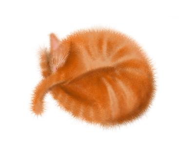 Cat illustration illustration