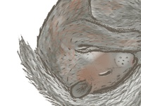 Sleeping Squirrel - Work in Progress