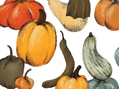 Pumpkins illustration texture autumn gourds pumpkins