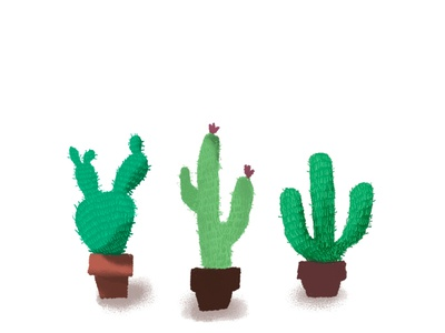 Cactus plant artist art illustration