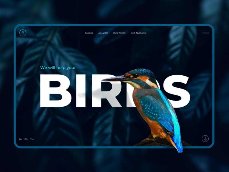 Design concept about birds bright colors ux branding figma photoshop birds ui web design design