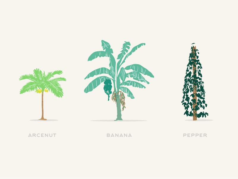 Trees Of India minimal vector vegetable fruit indian farmer india pepper banana arcenut trees