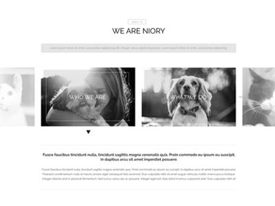 Niory theme version 4 web design uiux