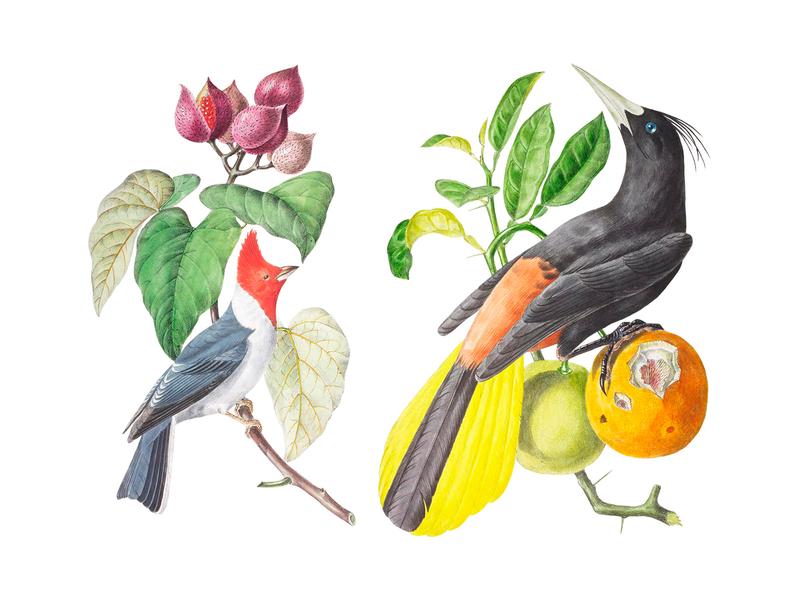 Eden Garden Illustrations Set download images tropical floral exotic graphic clipart tropic birds patterns garden illustration pixelbuddha