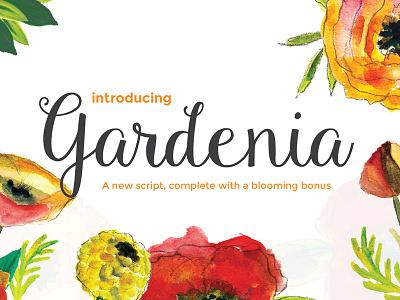 Freebie: Gardenia Script hand-drawn freebie pixelbuddha free font script