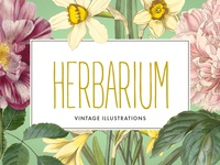 Freebie: Vintage Herbarium Illustrations