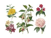 Freebie: Vintage Herbarium Illustrations #2