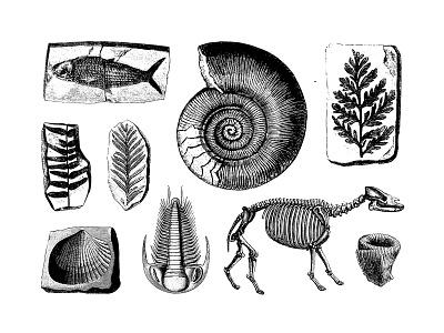 Freebie: Fossils Vector Illustrations Set paleontology elements vectors fossils freebie free illustration vector pixelbuddha