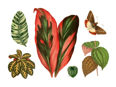 Tropical Vintage Graphic Set #3 download graphic exotic leaves butterfly floral illustration plant tropic vintage pixelbuddha