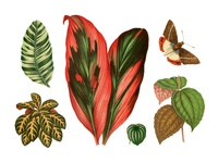 Tropical Vintage Graphic Set #3
