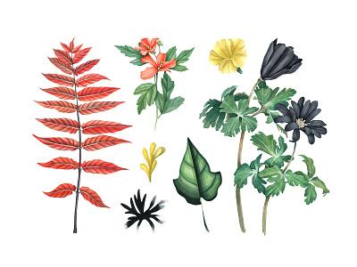 Botanical Garden Watercolor Set leaves flowers art pixelbuddha clipart illustration watercolor garden botanical download