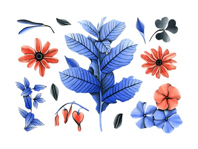 Botany Watercolor Flowers black red blue leaves clipart images png botanica botany flowers flower illustration watercolor pixelbuddha download