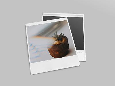 Realistic Polaroid Mockup Set vintage photo polaroid mockups mockup showcase pixelbuddha instagram download psd
