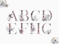Freebie: Noel Whisper Watercolor Alphabet