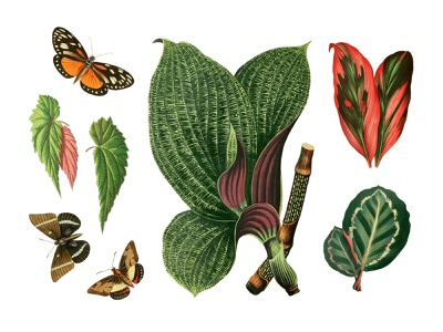 Tropical Vintage Graphic Set pixelbuddha vintage tropic plant illustration floral butterfly leaves exotic graphic download