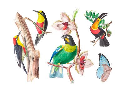 Eden Garden Illustrations Set pixelbuddha garden illustration patterns birds tropic clipart graphic exotic floral tropical images download