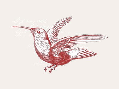 36 Engraved Bird Illustrations
