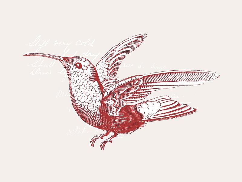 36 Engraved Bird Illustrations hummingbird vectors pixelbuddha logo illustration vector clipart birds bird download