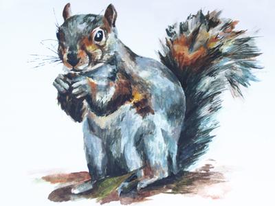 Grey Squirrel Illustration wildlife nature art technique craftmanship craft handpainted grey squirrel logo squirrel watercolour illustration watercolour painting design watercolor photography nature illustration texture colour graphicdesign