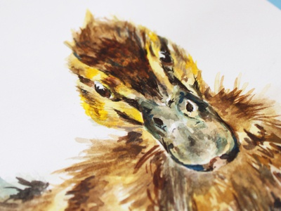 Duckling illustration detail wave feather texture detail duck logo duckling floating water gouache watercolour painting animals imagination design wildlife watercolor creativity nature photography illustration graphicdesign