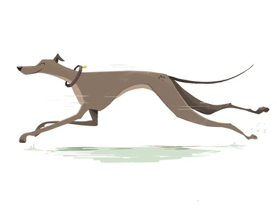Grey Hound cartoon illustration canine running animal dog grey hound greyhound