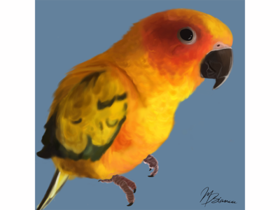 Merline-the sun conure