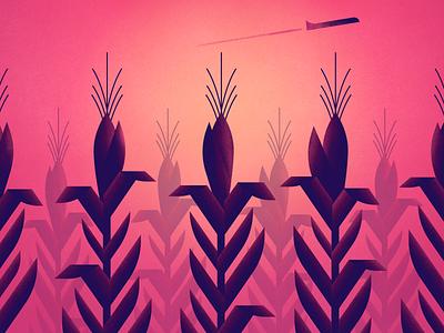 Corn pink backlit airplane sunset illustration corn