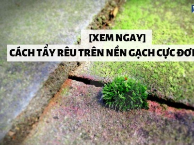 Cách tẩy rêu trên nền gạch Nhanh Chóng - Hiệu Quả tayreutrennengach cachtayreutrennengach gachmosaicinfo