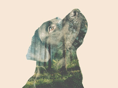 Double exposure alternative dog double exposure nature photography forest labrador