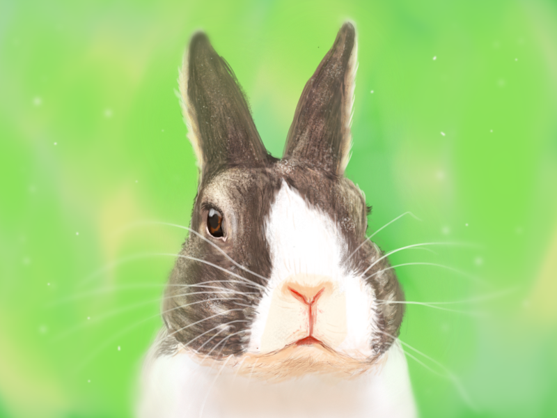 """""""Did somebody say 'carrots'?"""" painting sketchbook rabbit hobby"""