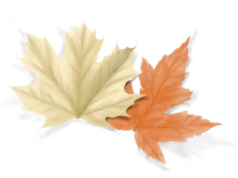 Fall leaf in procreate leaf orange procreate drawing draw