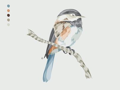For the Birds: Day 11 illustration bird