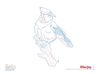 Bluejay meaning symbolism blue red design creative bird illustration