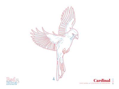 Cardinal cardinal line meaning symbolism blue red designs design bird illustration