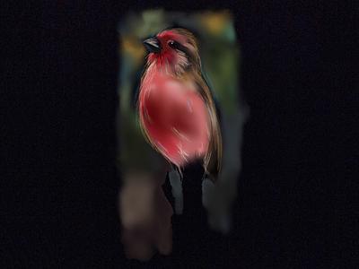 Red Bird bird ipad paper illustration