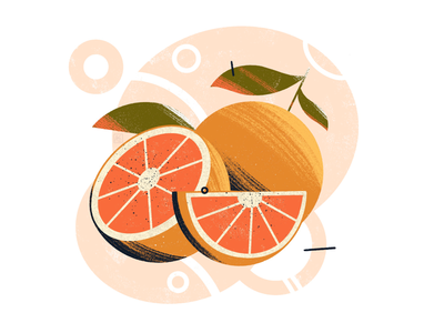Oranges fruit sketch sketchbook art illustration illustration