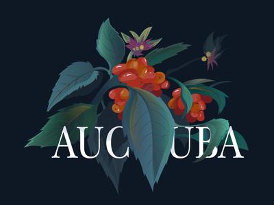 aucuba japonica illustration plant